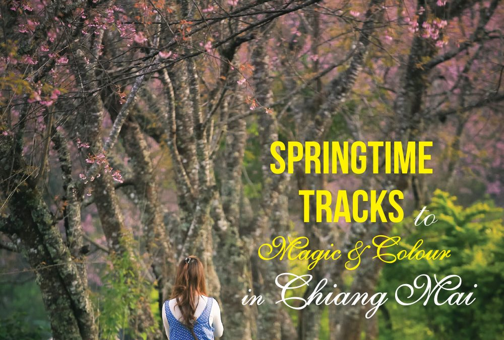 SPRINGTIME TRACKS to Magic of color in Chiang Mai